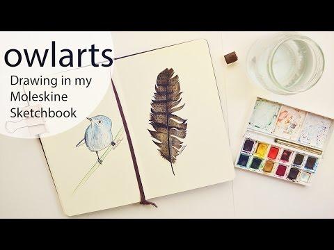 Drawing a Feather + Cartoon Bird