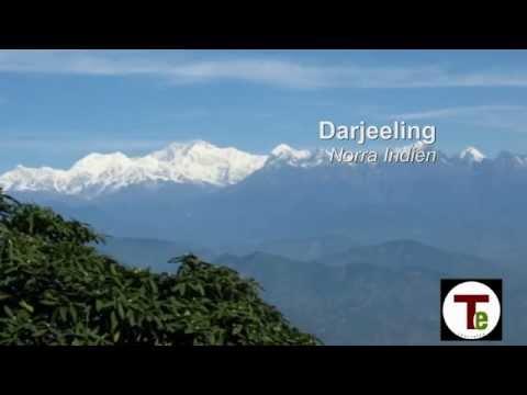 Teernas Champagne - Darjeeling First Flush 2012