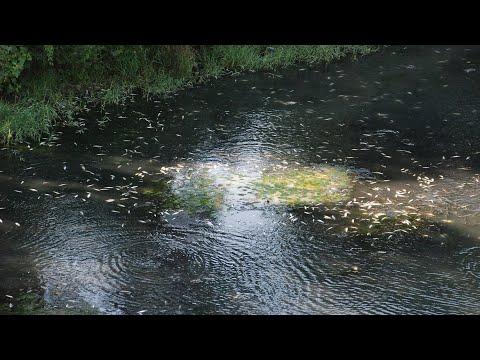 Bartın Irmağı'nda balıklar telef oldu