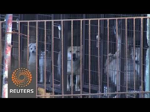 Activists rescue dogs raised for meat from farms in South Korea