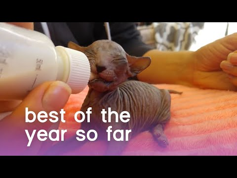 BEST OF THE YEAR...SO FAR (2019) | The Pet Collective - UCPIvT-zcQl2H0vabdXJGcpg