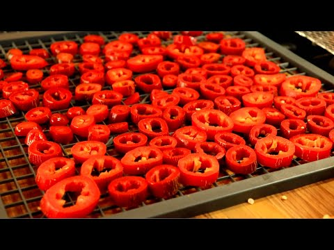The BEST way to dry CAYENNE and dehydrating peppers