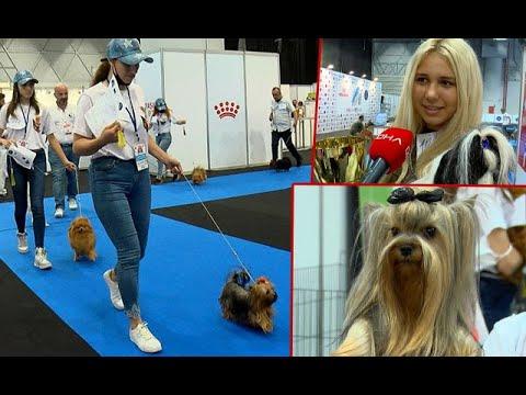 Evcil Hayvan Fuarı Kapılarını Ziyaretçilere Açtı