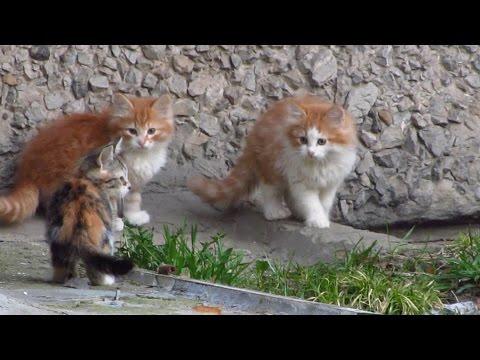 Cute kittens - funny feral kittens with my street - UCTZUTvv_1Onm-f-533Hyurw