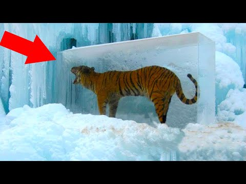 Животные, Замерзшие Во ЛЬДАХ