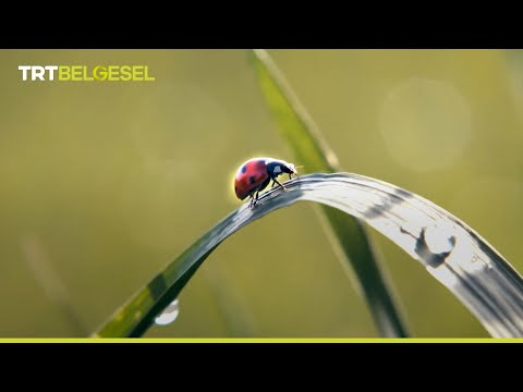 Süper Kahraman: Uğur Böceği 🐞🦸♂️