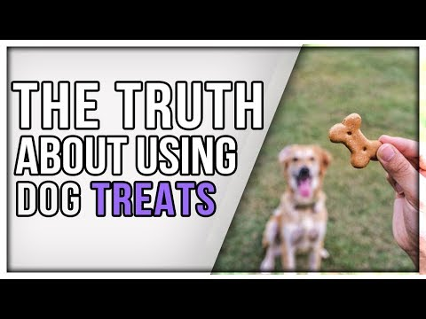 Is Treat Training Bad? Why I Use Food Instead Of Force For Training Dogs.