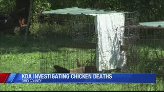'Mysterious' deaths of poultry at Ohio Co. home investigated