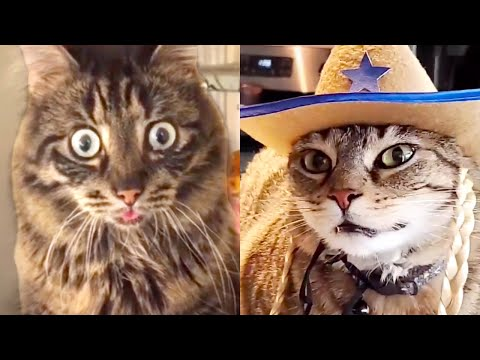 THIS CAT IS TRAUMATIZED | FUNNY CATS
