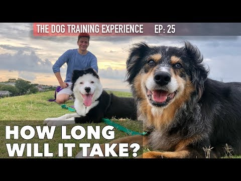 Trying to Train My Dog to be Good Around Other Dogs and My Cat!