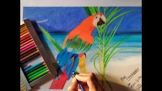 how to draw pencil sketch of parrot ? || for beginners || color pencil || artist choudhary ||