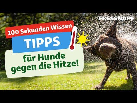 Tipps für Hunde bei Hitze
