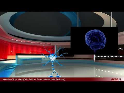 Neurolino Tipp 002 (Dein Gehirn - Ein Wunderwerk der Evolution)