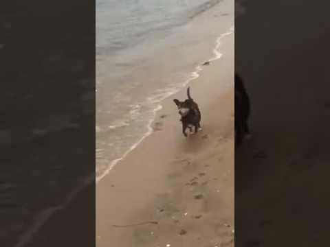Former Blue Dog, Sal, is a beach boy!