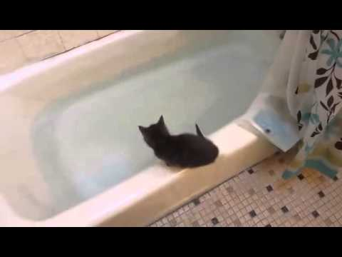 Funny Kitten jumps in bath tub - UC4IdppTKT5t1YjuG8gJ2Img
