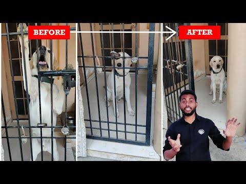 Labrador Dog Training - All About Dog Door Manners