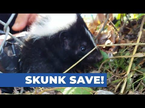 Skunk Save!
