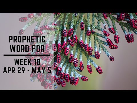 Daily Prophetic Week 18 2019