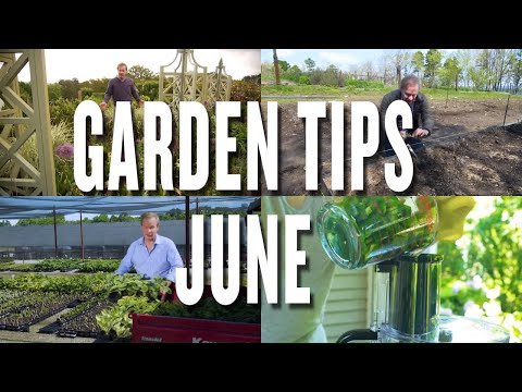 June Garden Tips and Projects: P. Allen Smith (2019)