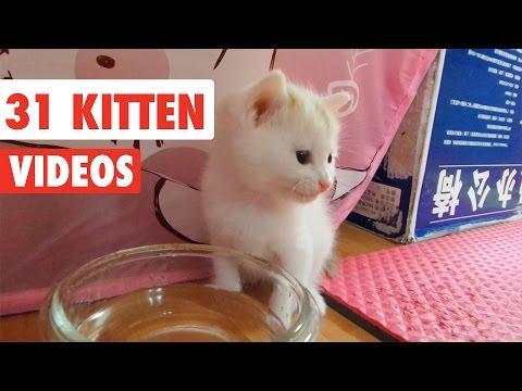 31 Funny Kittens | Cat Video Compilation 2017 - UCPIvT-zcQl2H0vabdXJGcpg