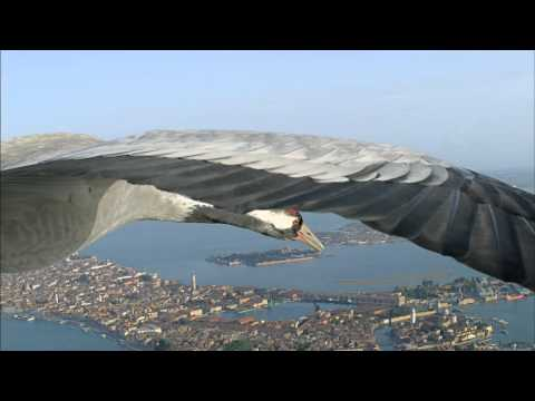 BBC Earthflight - Common Cranes Fly Over Venice
