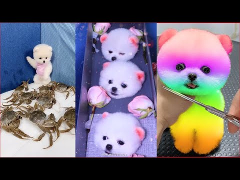 Cute Puppies 😍 Cute Funny and Smart Dogs Compilation - UCbNJI1n9Px_3auWRUV5hMiA