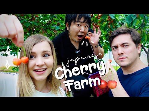Japan's Famous Yamagata Cherries: All-You-Can-Eat Cherry Farm 😍🍒