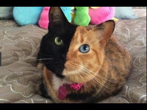 Video Tingkah Lucu Kucing Bikin Ketawa Ngakak 2019