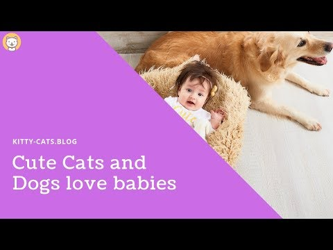 cute cats and dogs love babies 2019 - 🤣 funniest 🐱 cats and dogs 🐶  - awesome cute animals 2019