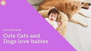 cute cats and dogs love babies 2019 - ? funniest ? cats and dogs ?  - awesome cute animals 2019