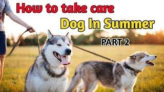 10 Benefits Of Labrador / In Hindi / benefits of Labrador