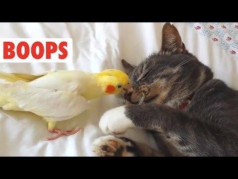Dog and Cat Boops Compilation | BOOP! - UCPIvT-zcQl2H0vabdXJGcpg