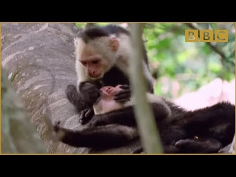 Funny Talking Animals - Walk On The Wild Side - Episode Three Preview - BBC One - UCCj956IF62FbT7Gouszaj9w