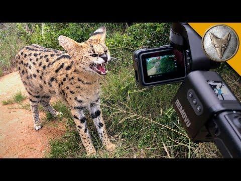 Ferocious Cat NEEDS MEAT! - UC6E2mP01ZLH_kbAyeazCNdg