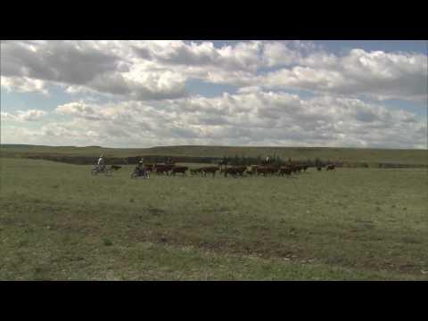 Maddo and Fehr heard cattle with FMX bikes - UCblfuW_4rakIf2h6aqANefA