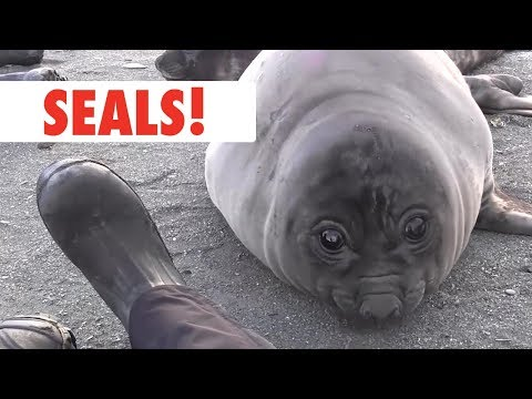 Breed All About It: Seals - UCPIvT-zcQl2H0vabdXJGcpg