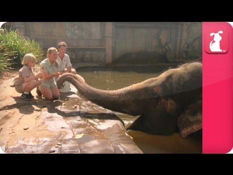 Bindi & Robert Irwin feature Siam the  Asian Elephant - Growing Up Wild - UCPIvT-zcQl2H0vabdXJGcpg