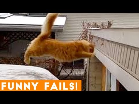 TRY NOT to LAUGH Animals FUNNY PET FAILS Compilation  2019 | Epic Pet Videos & Moments - UCYK1TyKyMxyDQU8c6zF8ltg
