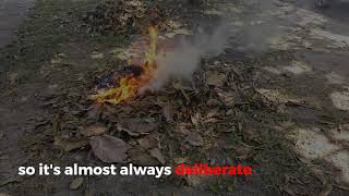 The Amazon Fires | Deliberate or natural?