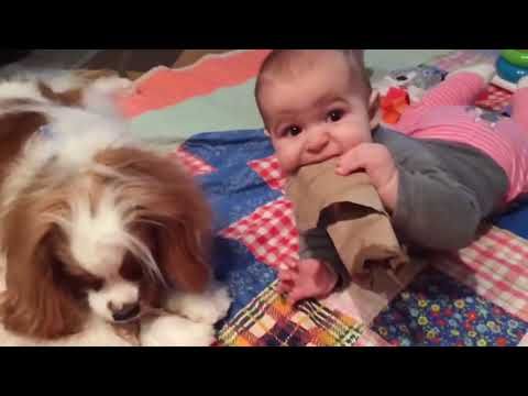 Cute Baby Playing With Dog Compilation   Baby and Pets Video