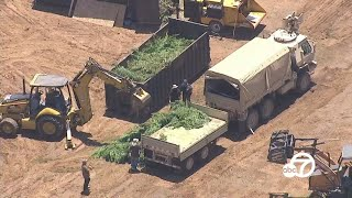 14.9 tons of marijuana , 37 firearms seized in Perris by Riverside County deputies I ABC7