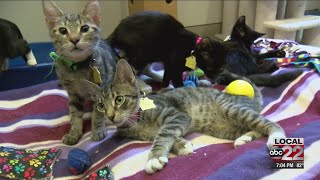 Over 50 kittens arrived in Chittenden County on Monday
