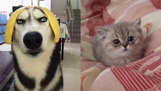 🤣Cute And Funny Cats 😺 Dogs 🐶 Videos Compilation Best Moment of the Animals # 7   CuteAnimalShare