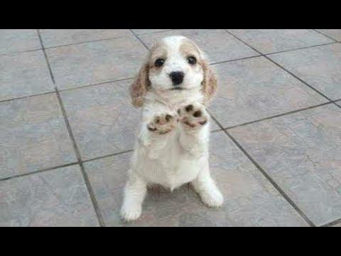 Dogs Demanding Petting Compilation 2017 [CUTE] - UCZSUvJTxnp7ay48TUJAf4RQ