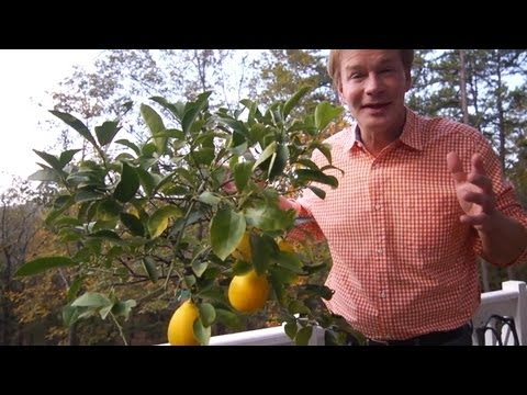 Winterizing Lemon Trees | At Home With P. Allen Smith - UCDgr7nAbzYCkWxTsSJFcoGg