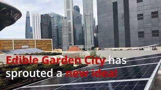 Curtin University's new Social Entrepreneurship course featuring Edible Garden City