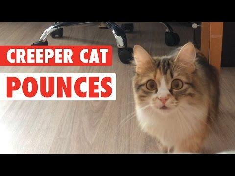 Kitty Cat Creeper || Cat Creeps to Camera - UCPIvT-zcQl2H0vabdXJGcpg