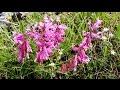 fioritura-castelluccio-norcia-dove-dormire-migliori-offerte