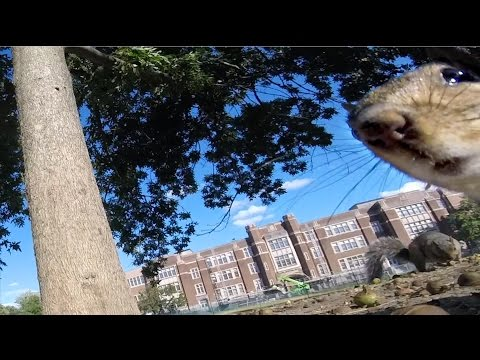 GoPro Awards: Squirrel Runs Off With GoPro - UCqhnX4jA0A5paNd1v-zEysw