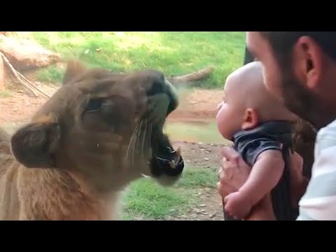 Best Of The 2020 Funny Animal Videos 😁 - Funny Animals Reaction - Funny Moments Compilation 2020 - UC5-Vfq-dFfj6R77-OFMEn7w